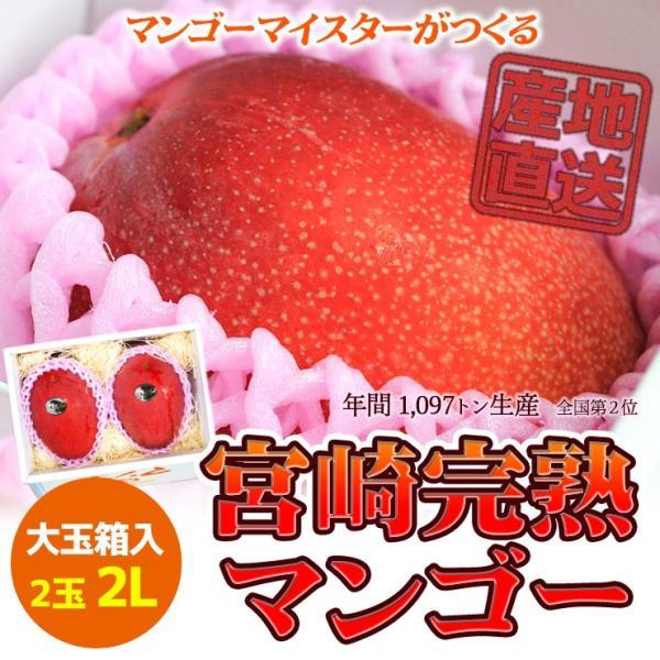 ご贈答用 6月発送 宮崎完熟マンゴー 日南市マンゴー町 マンゴーマイスターがつくる 大玉2Lサイズ 2個入