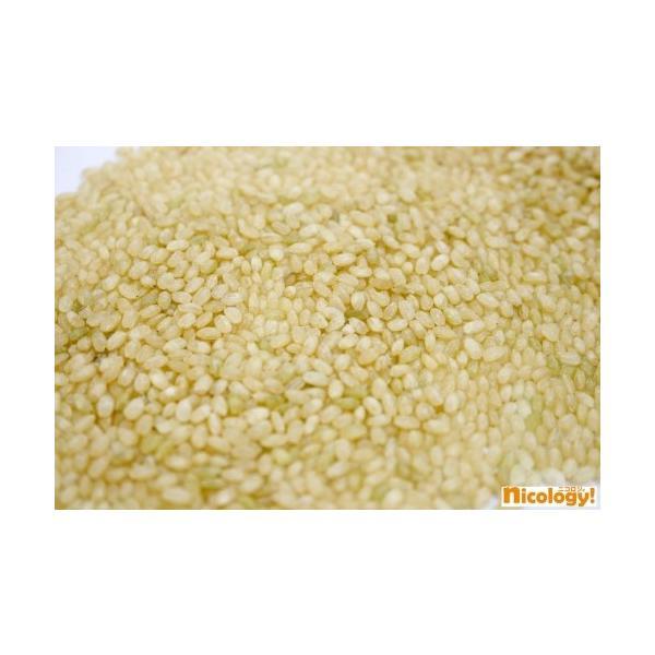美玄米 ふっくらもちもち玄米食 450g×12本 nicology-store 02