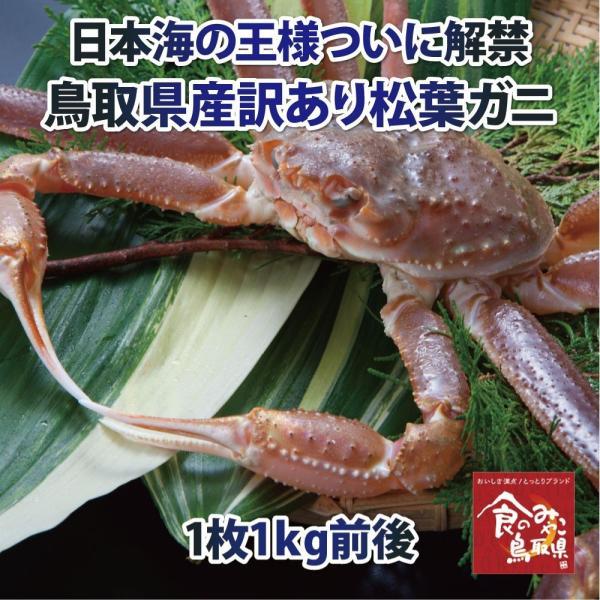 【ご予約】松葉ガニ 訳あり(活)特大サイズ1枚1kg前後 1落ち程度
