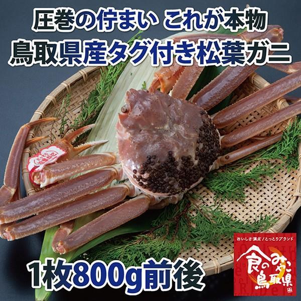 【ご予約】タグ付き松葉ガニ(活)大サイズ1枚800g前後
