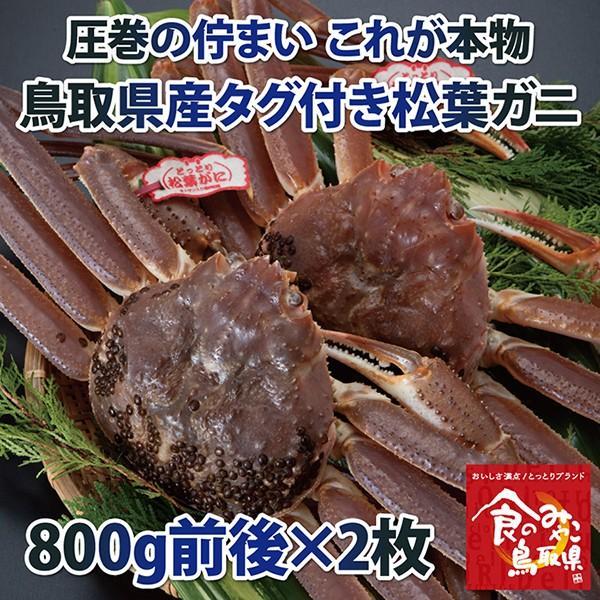 【ご予約】タグ付き松葉ガニ(活) 大サイズ2枚で1.6kg前後