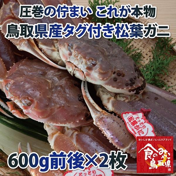 【ご予約】タグ付き松葉ガニ(活) 中サイズ2枚で1.2kg前後