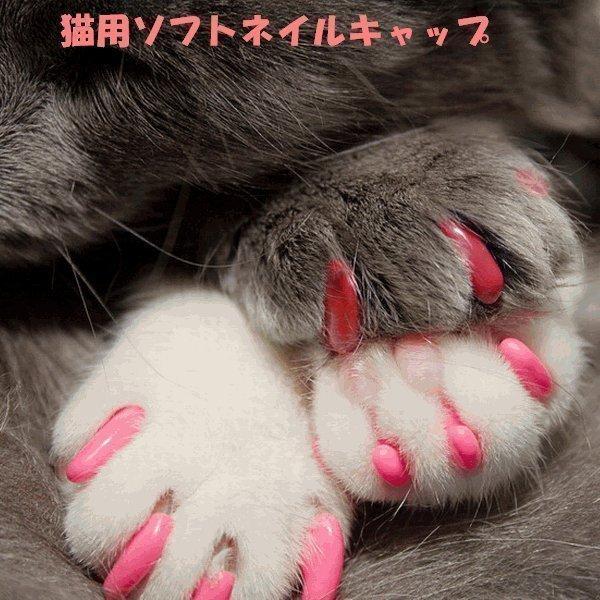 セール/特価/返品・交換不可 ネイルキャップ 猫用 ネイルカバー 20個セット 専用接着剤付き メ ル便送料無料|nikkashop|10