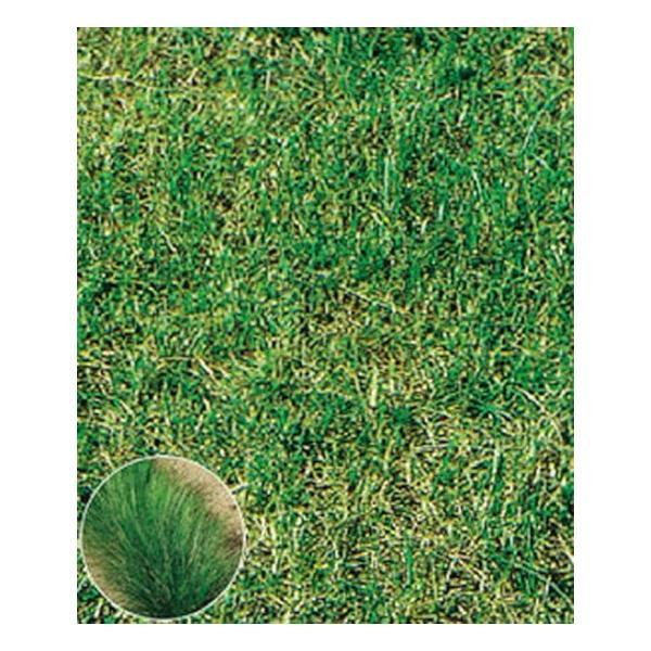 タキイ種苗 芝 クリーピングレッドフェスク・ナビゲーター2(エンドファイト活性) 0.5kg