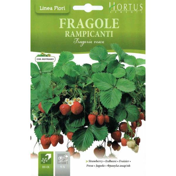 HORTUS社 アルパインストロベリー Fragole-rampicanti (内容量:0.15g) [f014][COD.BGFFRA001]