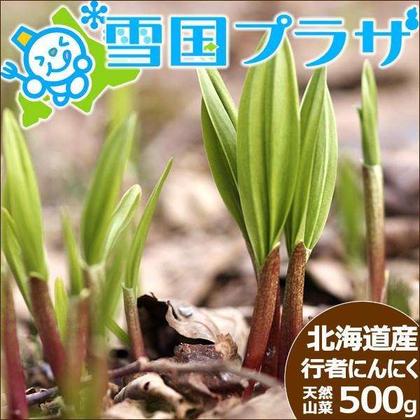 【2022年/予約】北海道産 行者にんにく 生 500g 天然物 行者ニンニク キトビロ アイヌネギ 山菜 ギフト 北海道 送料無料 お取り寄せ