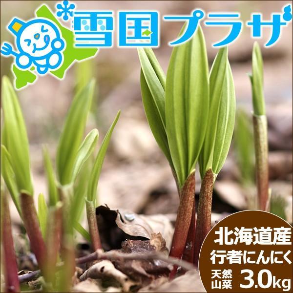 【2022年/予約】北海道産 行者にんにく 生 3kg 天然物 行者ニンニク キトビロ アイヌネギ 山菜 ギフト 北海道 送料無料 お取り寄せ