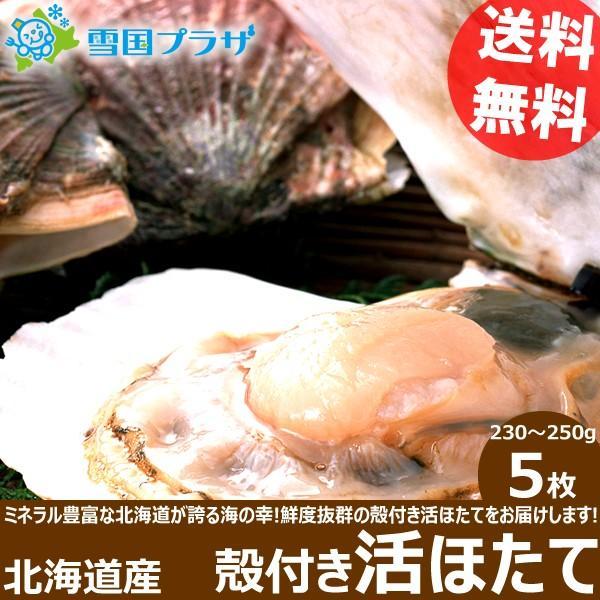 北海道産 殻付き ホタテ 活帆立貝 5枚 ほたて ギフト 贈り物 北海道 物産展 応援 支援 食品 グルメ お取り寄せ