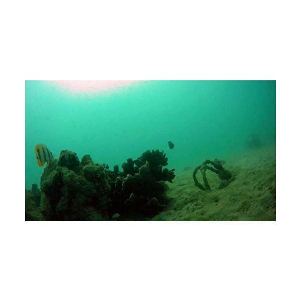 ThorRobotics Underwater Drone 110ROV Underwater Robot Camera With Mechanic