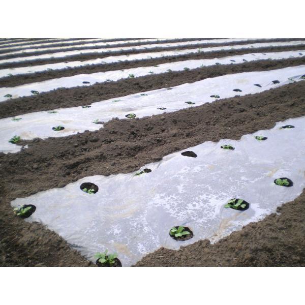 農業用マルチシート ホールマルチ半透明(銀ネズ)  長さ200m×孔60mm×3430