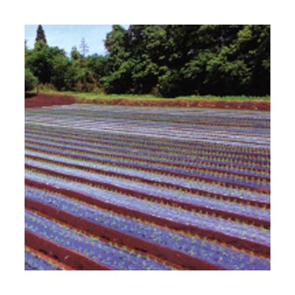 農業用マルチシート 保温マルチ  長さ200m×厚さ0.02mm×幅150cm