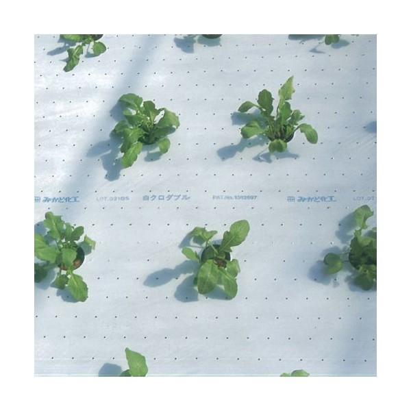 農業用マルチシート 白黒マルチ(全面有孔) 幅180cm×長さ200m