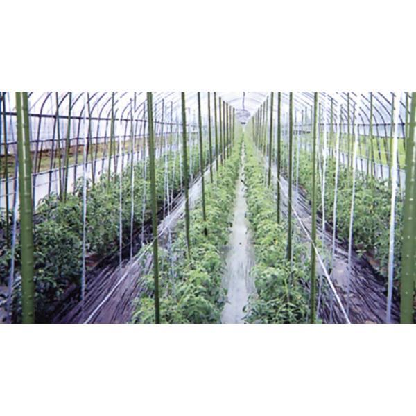 農業用支柱 鋼管竹(タキロン) 径13.7mm×長さ120cm