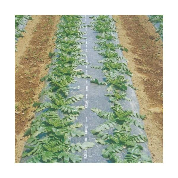 農業用マルチシート 防虫マルチ 緑  長さ200m×幅95cm  5本セット