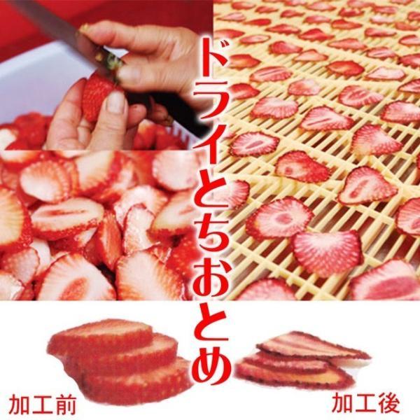 ポイント消化 ドライフルーツ 1000円 ポッキリ 国産 お試し 4種 送料無料 いちご ラフランス パイナップル すもも 無添加|no-brand|10