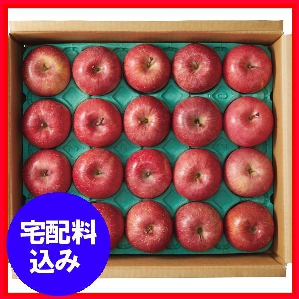 お歳暮 早割 果物 青森県産 サンふじりんご5kg 通販 1010-529