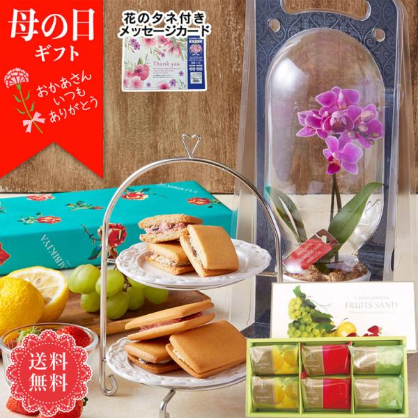 母の日プレゼント早割クーポンで5%OFF マイクロ胡蝶蘭&「銀座千疋屋」銀座フルーツサンドセット「MC-S」