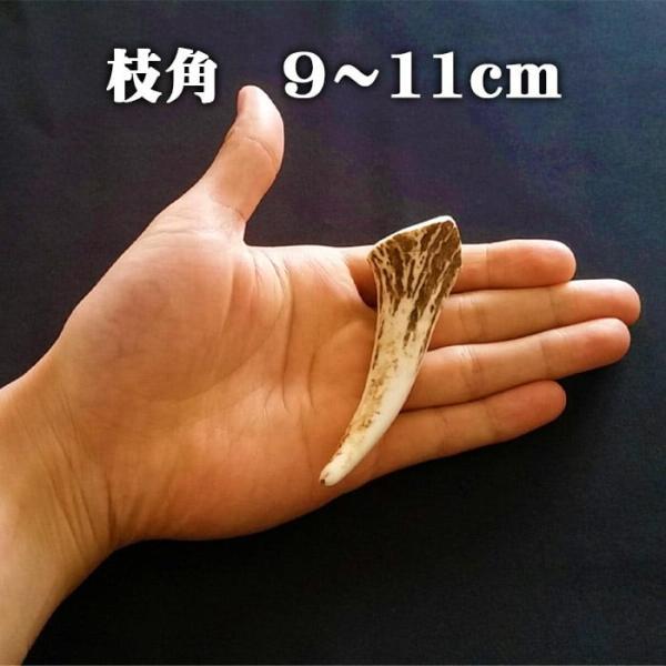 【鹿角】おまかせ 枝角 9cm〜11cm 用途自由 ペットおもちゃ、アクセサリー色々。北海道エゾシカつの【ネコポス送料無料】