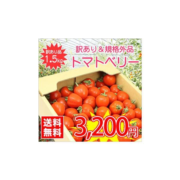 【送料無料】【規格外品】今話題のミニトマト★北海道名寄産訳ありトマトベリー【規格外・サイズ不揃い】 約1.5kg入 ※7月中旬以降収穫後のお届けとなります。