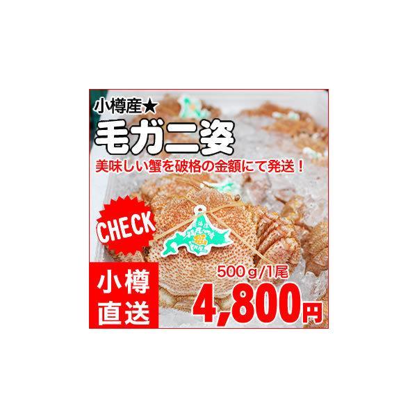 【送料別】小樽直送 冷凍毛ガニ姿/約500g 1尾