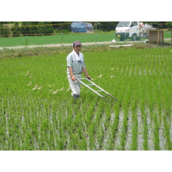 送料込 JAS有機あいがも栽培米(精米)5kg|nousan|03