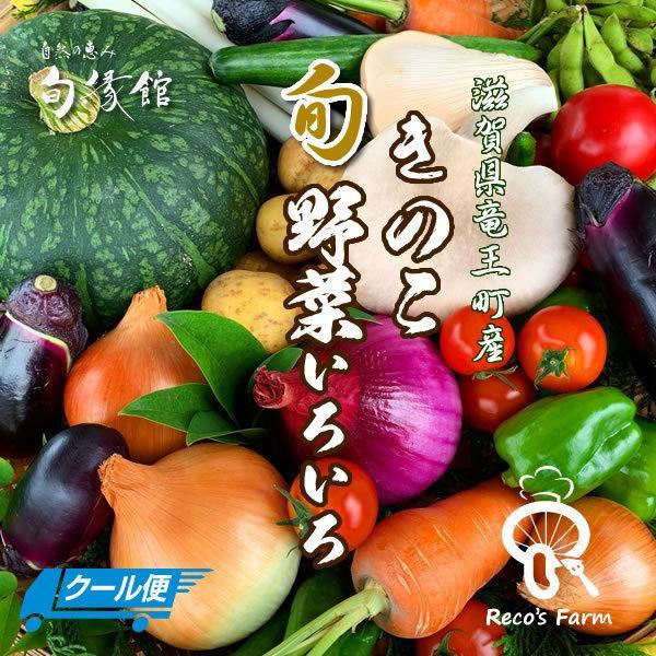 竜王きのこ旬野菜いろいろセット