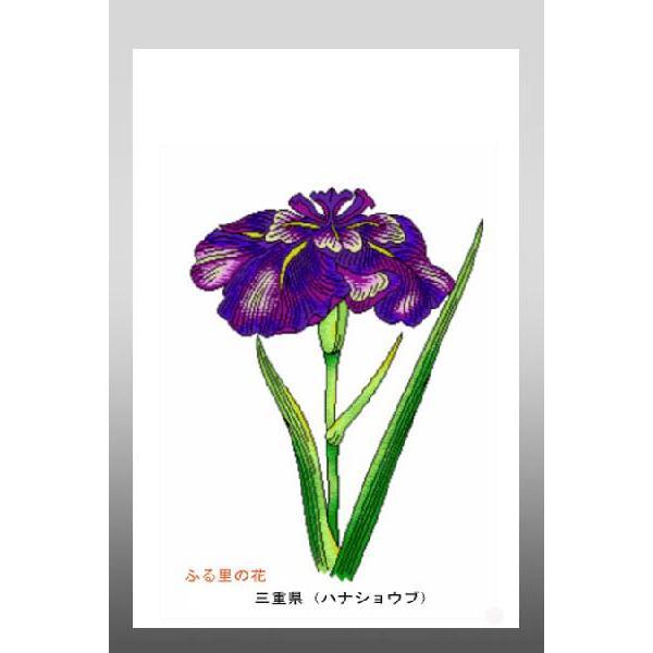 花 イラスト ポストカード 絵葉書 イラスト画「ふる里の花」三重県(ハナショウブ)