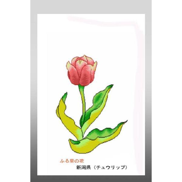 花 イラスト ポストカード 絵葉書 イラスト画ふる里の花新潟県チューリップ