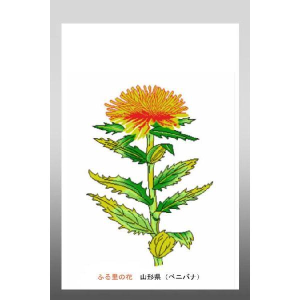 花 イラスト ポストカード 絵葉書 イラスト画「ふる里の花」山形県(ベニバナ)