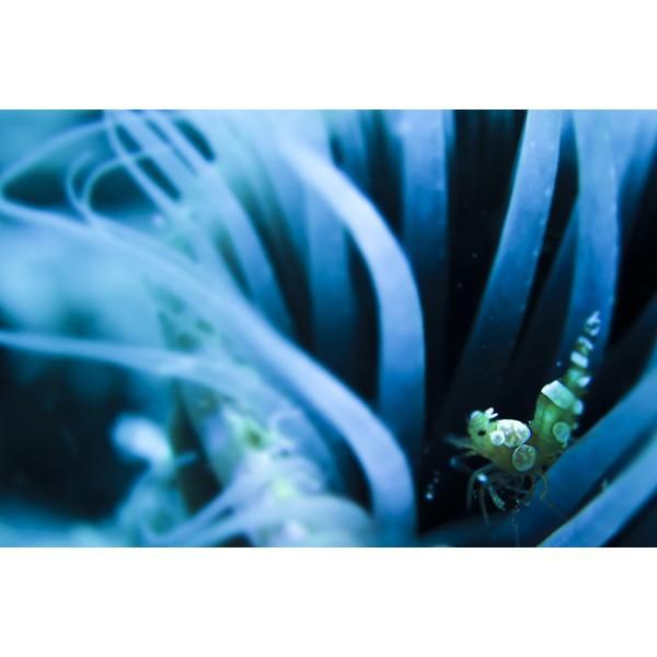 カメラレンズ 6C改 ふわっとやわらかいマクロ撮影 オリンパス防水プロテクターPT-056・058対応|oceans-family|03