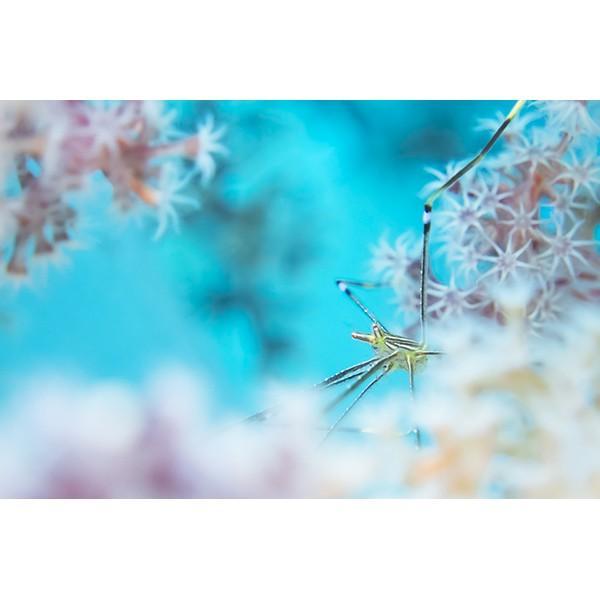 カメラレンズ 6C改 ふわっとやわらかいマクロ撮影 オリンパス防水プロテクターPT-056・058対応|oceans-family|04