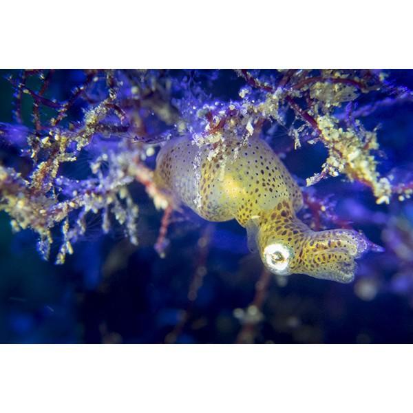 カメラレンズ 6C改 ふわっとやわらかいマクロ撮影 オリンパス防水プロテクターPT-056・058対応|oceans-family|05
