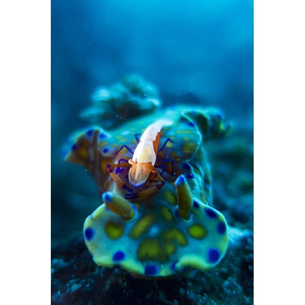 カメラレンズ 6C改 ふわっとやわらかいマクロ撮影 オリンパス防水プロテクターPT-056・058対応|oceans-family|06