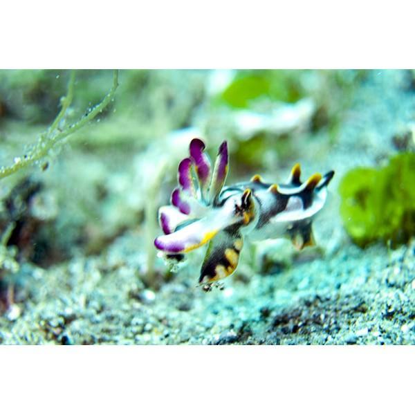 カメラレンズ 6C改 ふわっとやわらかいマクロ撮影 オリンパス防水プロテクターPT-056・058対応|oceans-family|07
