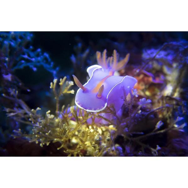 カメラレンズ 6C改 ふわっとやわらかいマクロ撮影 オリンパス防水プロテクターPT-056・058対応|oceans-family|09