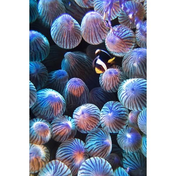 カメラレンズ 6C改 ふわっとやわらかいマクロ撮影 オリンパス防水プロテクターPT-056・058対応|oceans-family|10