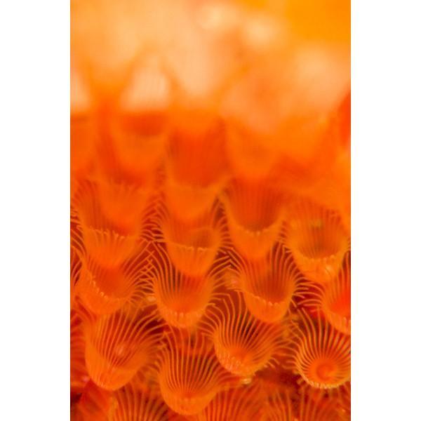 カメラレンズ トト10 10倍率スーパーマクロ撮影 オリンパス防水プロテクターPT-056・058・059対応|oceans-family|07