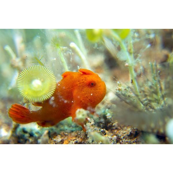カメラレンズ トト10 10倍率スーパーマクロ撮影 オリンパス防水プロテクターPT-056・058・059対応|oceans-family|10
