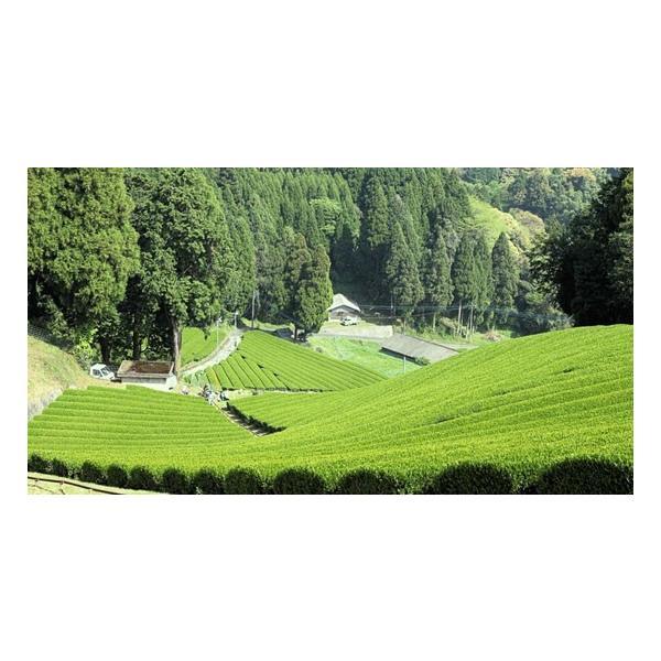 基山の翠 100g 5本/特上煎茶/新茶/煎茶/茶葉/緑茶/日本茶/お茶|ocha-sonobe|02