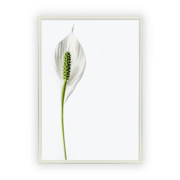 アートポスター/Aroma of Paris/選べる7サイズ&ポスター単品orフレームセット/Design:#260 octopus-goods01 11