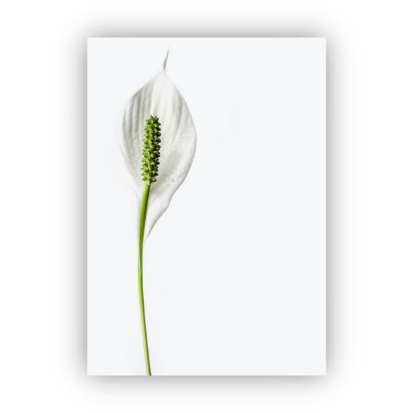 アートポスター/Aroma of Paris/選べる7サイズ&ポスター単品orフレームセット/Design:#260 octopus-goods01 07