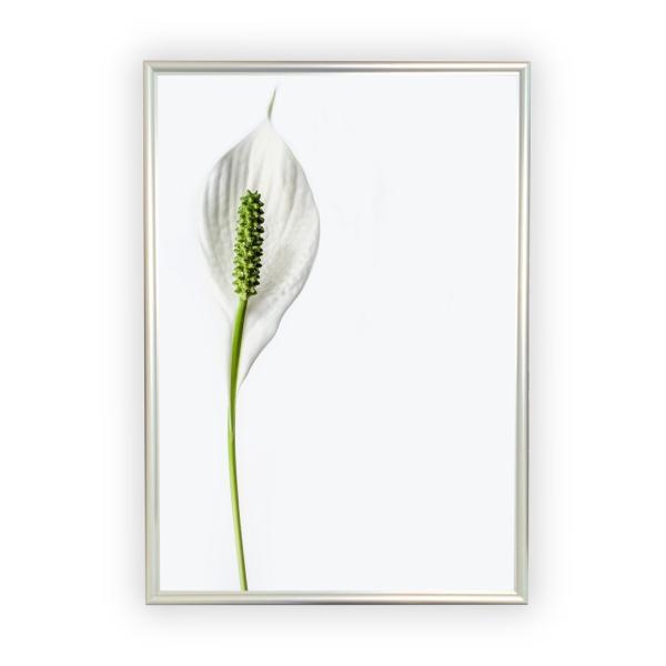 アートポスター/Aroma of Paris/選べる7サイズ&ポスター単品orフレームセット/Design:#260 octopus-goods01 10