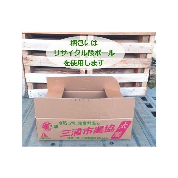 マツバギク10Potセット・苗 多肉植物(セダム) (1Potあたり230円) odaiba-gardenclub 06