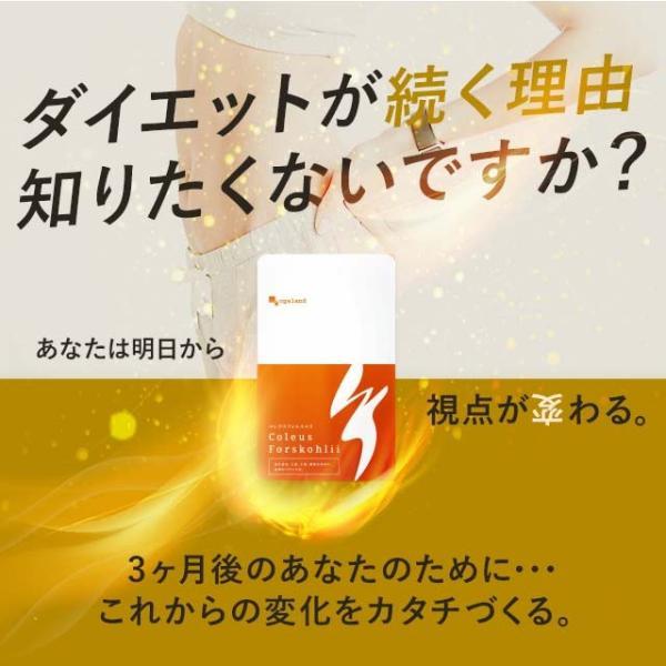 コレウス フォルスコリ (フォレスコリ フォルスコリン) 燃焼系 サプリ サプリメント 約3ヶ月分|oga|04