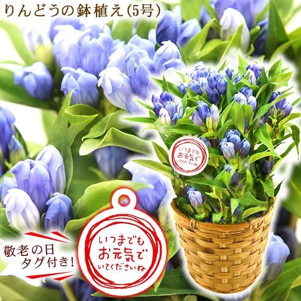 敬老の日 プレゼント 花 お菓子 グルメ  鉢花 生花 アレンジメント oimoya 04