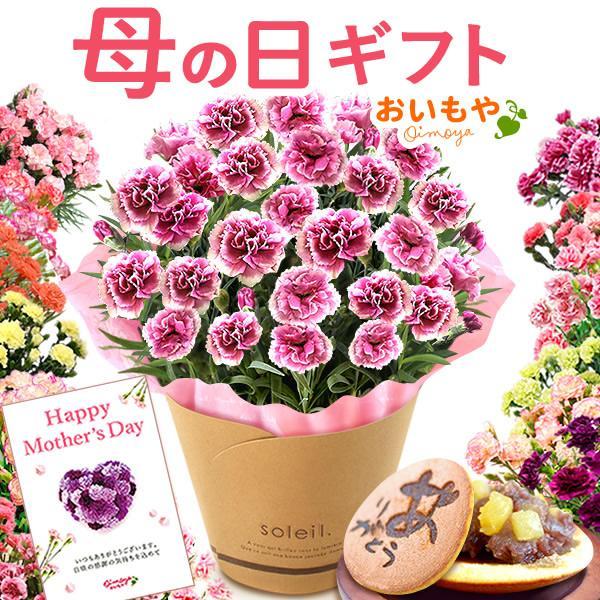 母の日 2017 カーネーション プレゼント スイーツ フラワー ギフト 鉢植え 早割 幸せカーネーション花とスイーツ 5号鉢 carnation