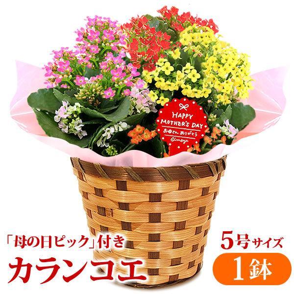 敬老の日 プレゼント 花 お菓子 和菓子 スイーツ 鉢植え 70代 80代 ギフト カランコエ 2019|oimoya|04