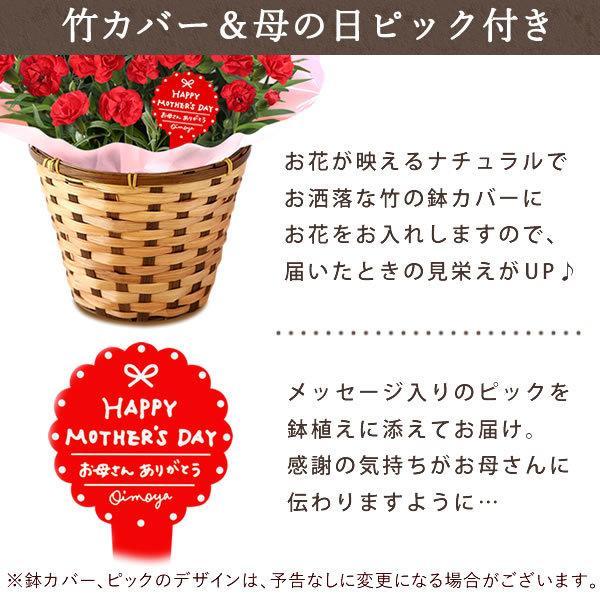 母の日 ギフト 花 母の日 プレゼント カーネーション 鉢植え 花鉢 お菓子 スイーツ 2020 ギフトランキング 5号鉢 oimoya 14