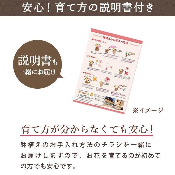母の日 ギフト 花 母の日 プレゼント カーネーション 鉢植え 花鉢 お菓子 スイーツ 2020 ギフトランキング 5号鉢 oimoya 16