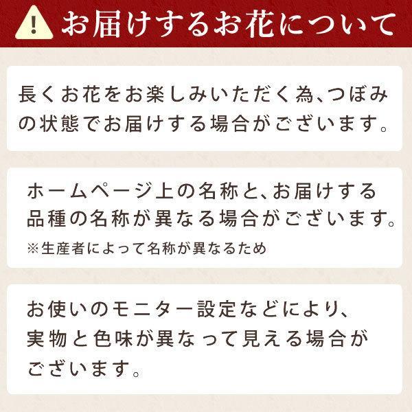 母の日 ギフト 花 母の日 プレゼント カーネーション 鉢植え 花鉢 お菓子 スイーツ 2020 ギフトランキング 5号鉢 oimoya 18
